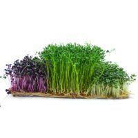 Micro greens 1
