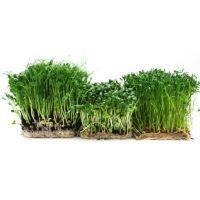 Micro greens 2