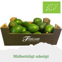 baby-avocado-udsolgt