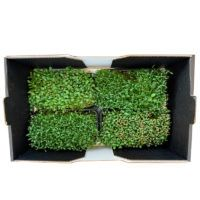 micro-green-mix-freshland