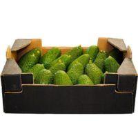 avocado-pt-4kg (1)