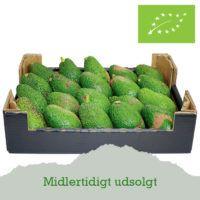 Reddet-avocado-udsolgt