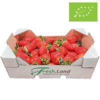 øko-jordbær-DK